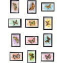 Mocambique. 1953 Butterflyies in complete set. Michel 417-36 stemplet/used